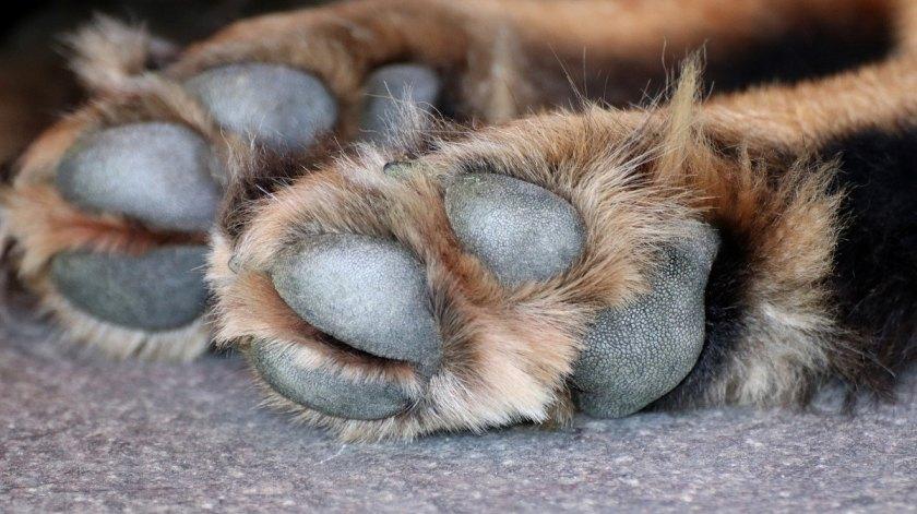 Foto tomada de: Mundo Perros