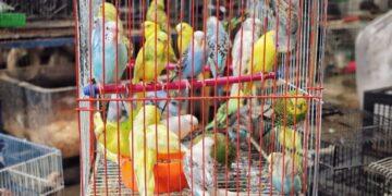 bienestar de la fauna doméstica